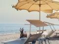 animaletto-asino-in-spiaggia-isola-verde-bagni-tamerici